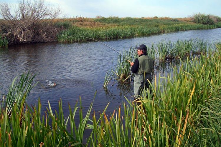 Рыболовный туризм в ростовской области